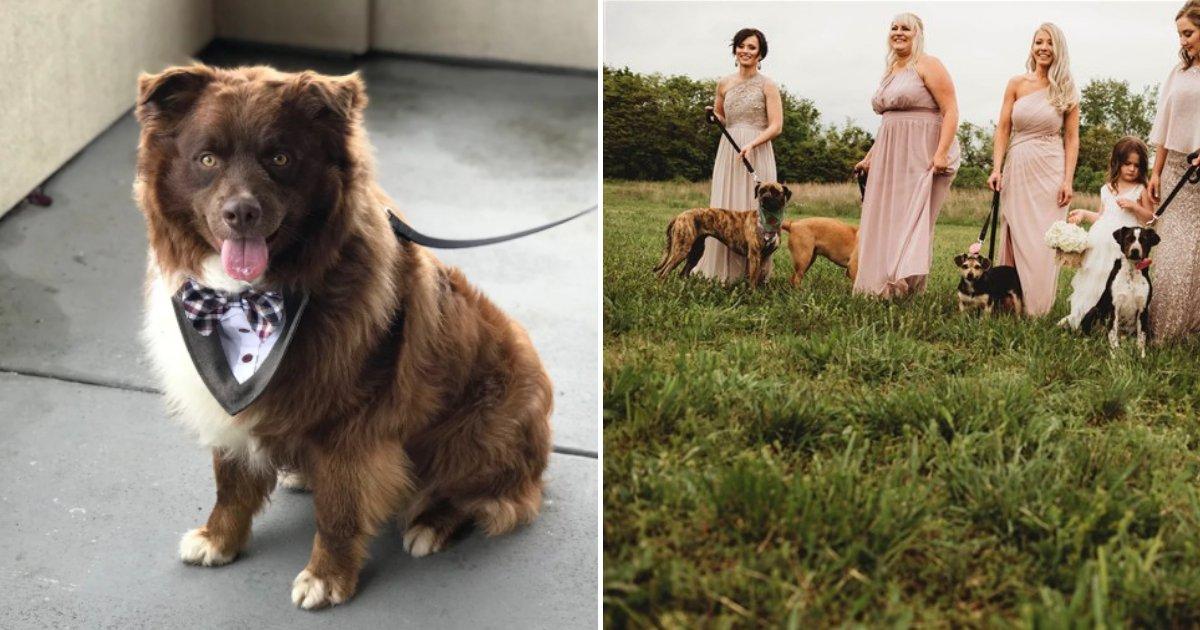 dogs7.png?resize=412,232 - Une mariée demande à ses demoiselles d'honneur de porter des chiens dans l'allée au lieu de bouquets