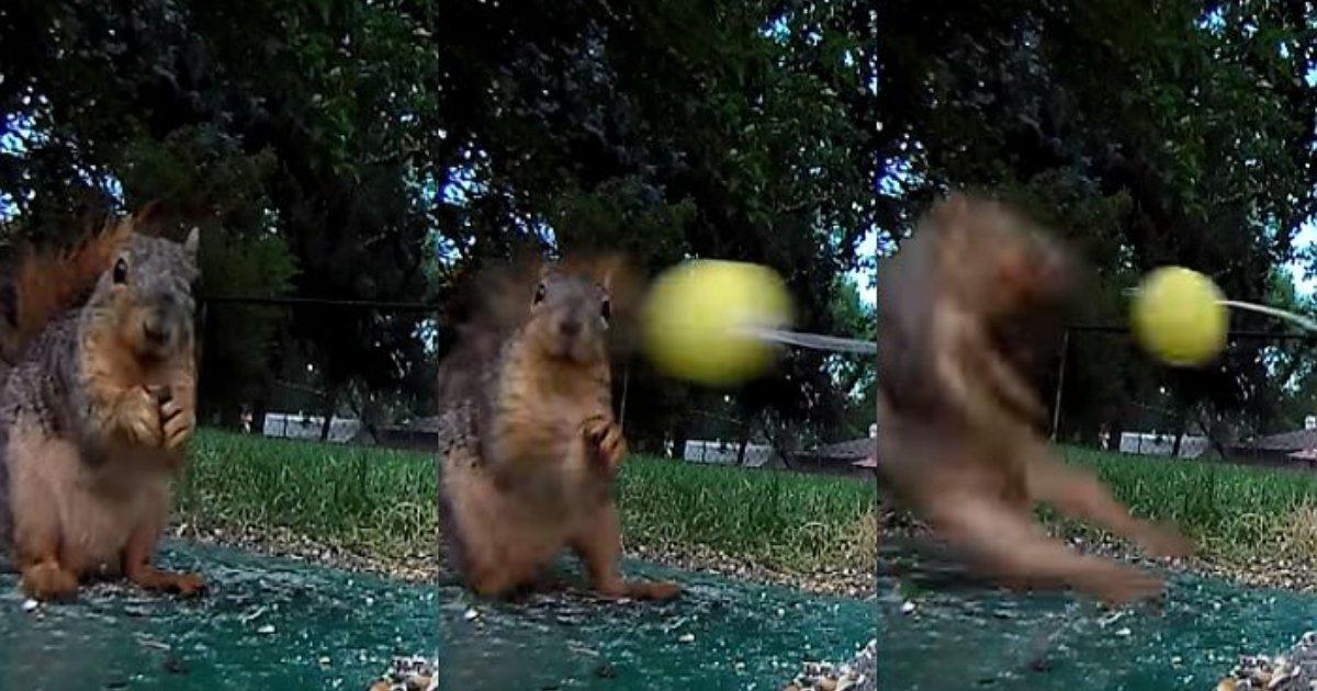 e696b0e5bbbae9a1b9e79bae 5 2.png?resize=1200,630 - お腹が空いているリスを誘引して、おもちゃのボールを打つ映像を公開したユーチューバー