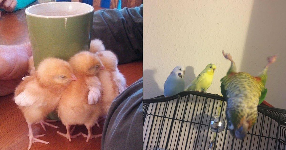 """ec8388.jpg?resize=412,232 - """"왜 그러고 있어?""""...'순간 포착'한 귀여운 새들의 모습 TOP 10"""