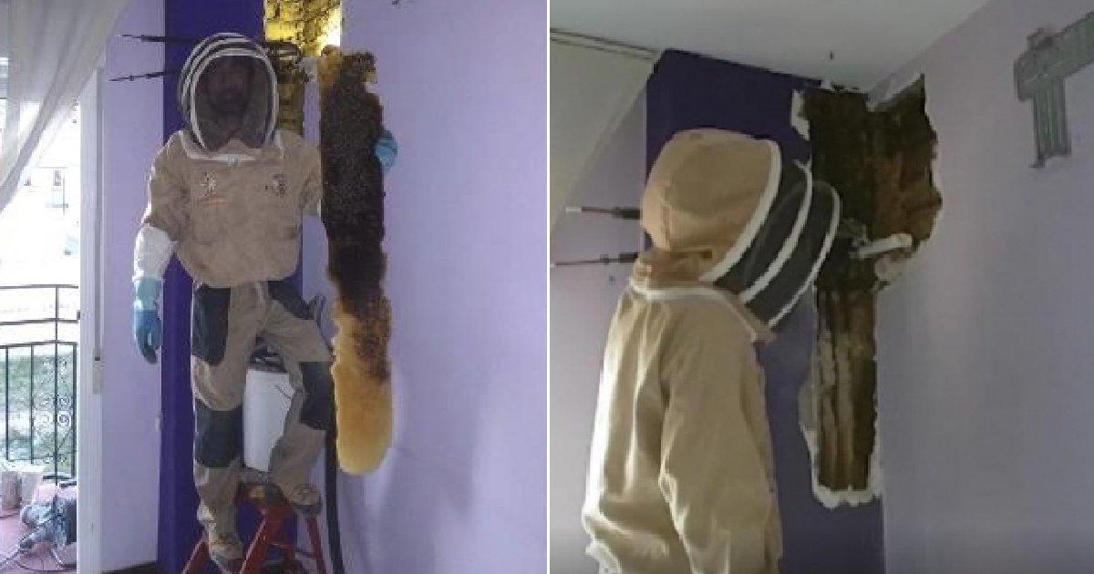 """eca09cebaaa9 ec9786ec9d8c 81.png?resize=1200,630 - """"침실에서 꿀벌 8만 마리와 사람 키만한 벌집이 나왔어요"""""""