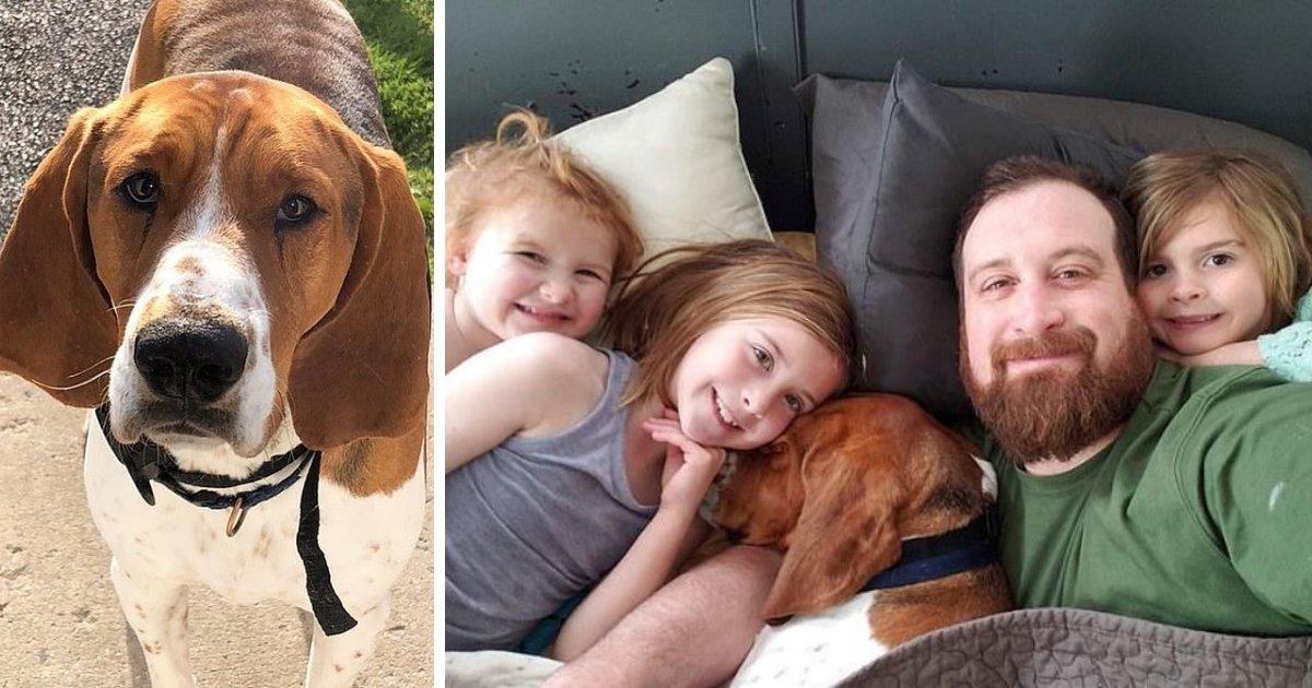 edgar6.png?resize=300,169 - Un chien a sauvé trois enfants d'un enlèvement au milieu de la nuit