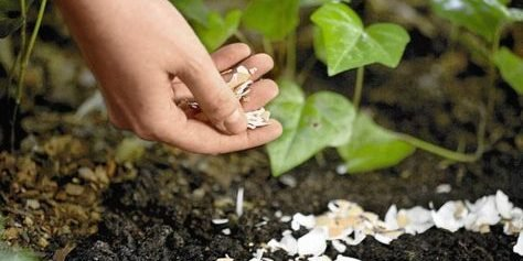 eggshells e1557242379176.jpg?resize=1200,630 - 40+ Gardening Tips That Will Make Your Garden Bloom In No Time