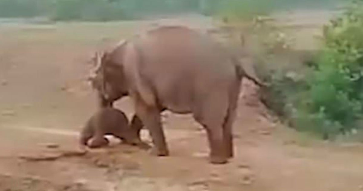 elephant killed man.jpg?resize=1200,630 - A Man Killed By An Elephant After Locals Pelted Stones At The Animal