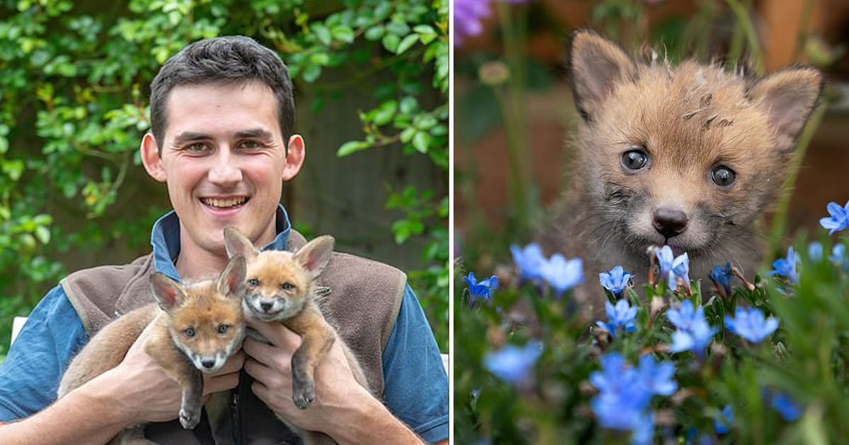 farmer saved fox cub.jpg?resize=1200,630 - Farmer Performed An Emergency C-Section On A Dead Fox And Saved The Lives Of Her Four Cubs