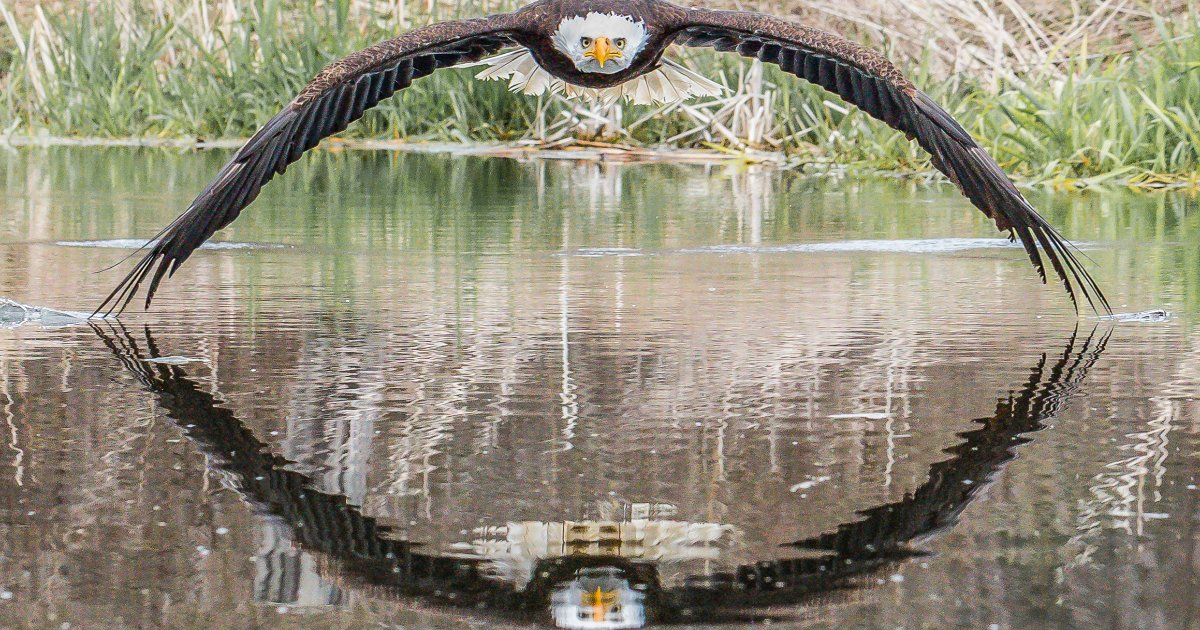 featured image 78.png?resize=300,169 - Magnificent Picture Of An Eagle Staring Directly Into The Lens Of Camera