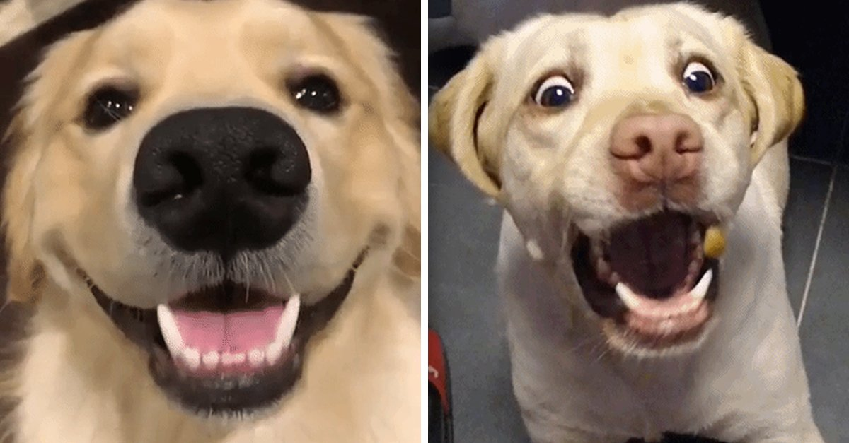 happy dog.jpg?resize=1200,630 - 20+ Signs That Shows You're Dog Is Truly Happy