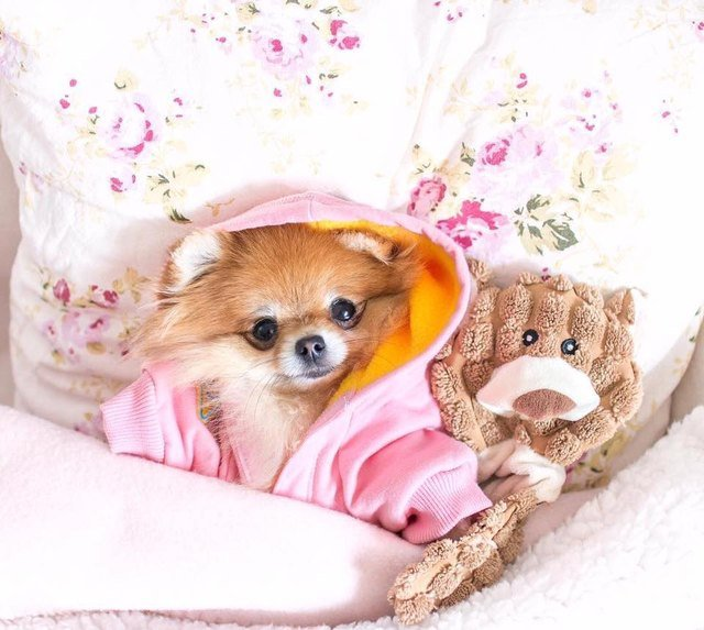 Dog in robe