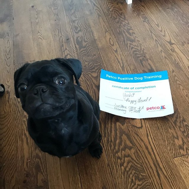 Smiling puppy next to puppy school graduation diploma.