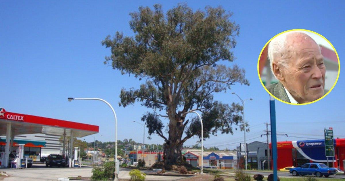 man fighting save tree.jpg?resize=412,232 - Un ancien combattant de la Seconde Guerre mondiale s'est engagé à sauver un arbre vieux de 300 ans à Melbourne qui sera détruit