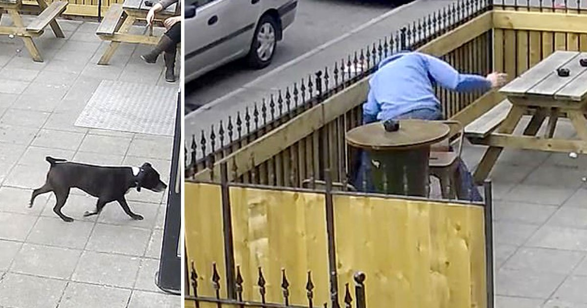 man punched dog.jpg?resize=412,232 - Man Grabbed A Dog By The Throat Before Throwing It Against A Fence In A Pub Garden