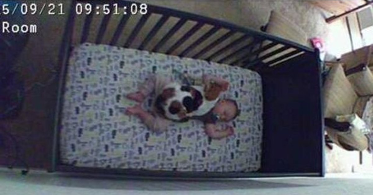 not watching.png?resize=412,232 - 20+ Pets Doing Crazy Things When Their Owners Are Not Looking