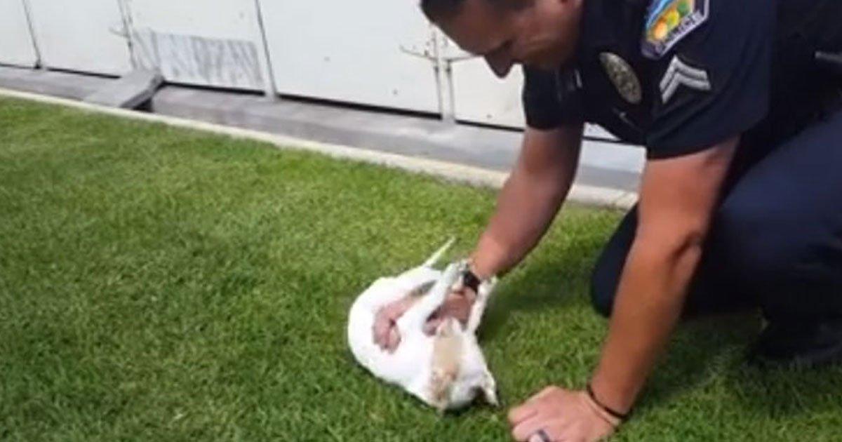 officer dog reunion.jpg?resize=412,232 - Un agent de police rend visite au chiot qu'il a sauvé en mars, celui-ci le reconnait immédiatement !