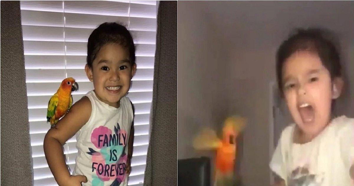 p3.jpg?resize=300,169 - Une petite fille est devenue virale après avoir entraîné son perroquet à attaquer toute personne qu'elle désigne