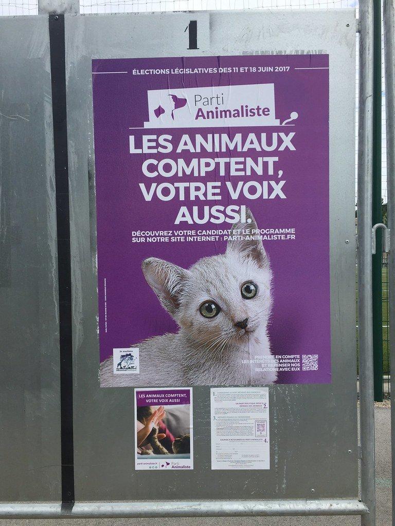 parti animaliste flickr.jpg?resize=412,232 - Qu'est-ce que le parti animaliste?