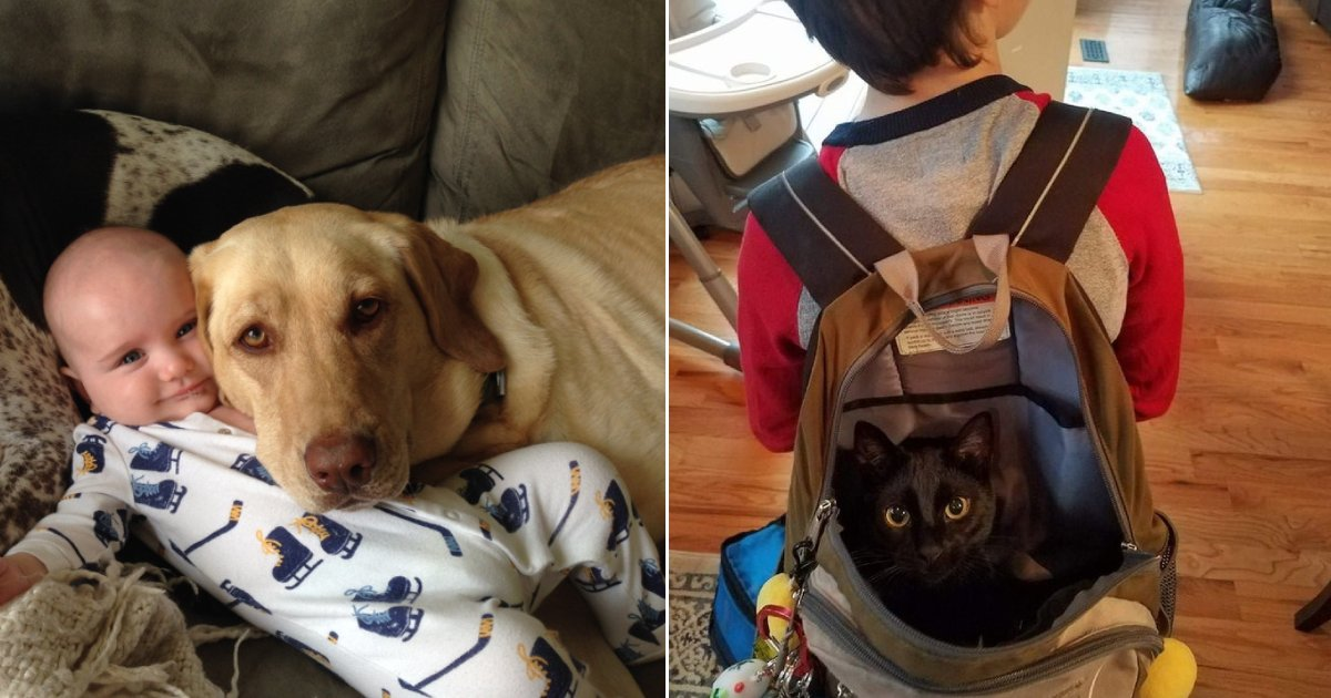 pet compan.png?resize=412,232 - 15+ Pictures That Show Animals Are The Best Companions For Children