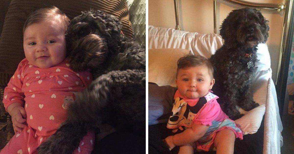 polo6.png?resize=1200,630 - Un chien donne sa vie pour sauver une fillette du feu à cause d'une bougie