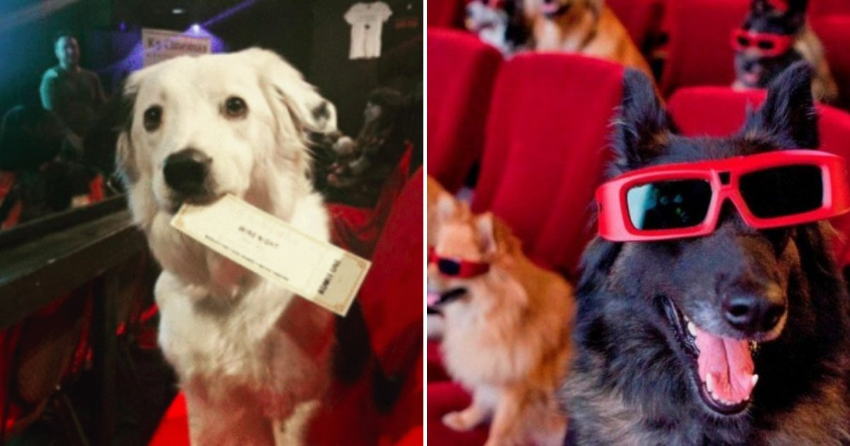 pups2.png?resize=1200,630 - New Movie Theater Lets You Take Your Dog Inside And Enjoy Bottomless Wine!