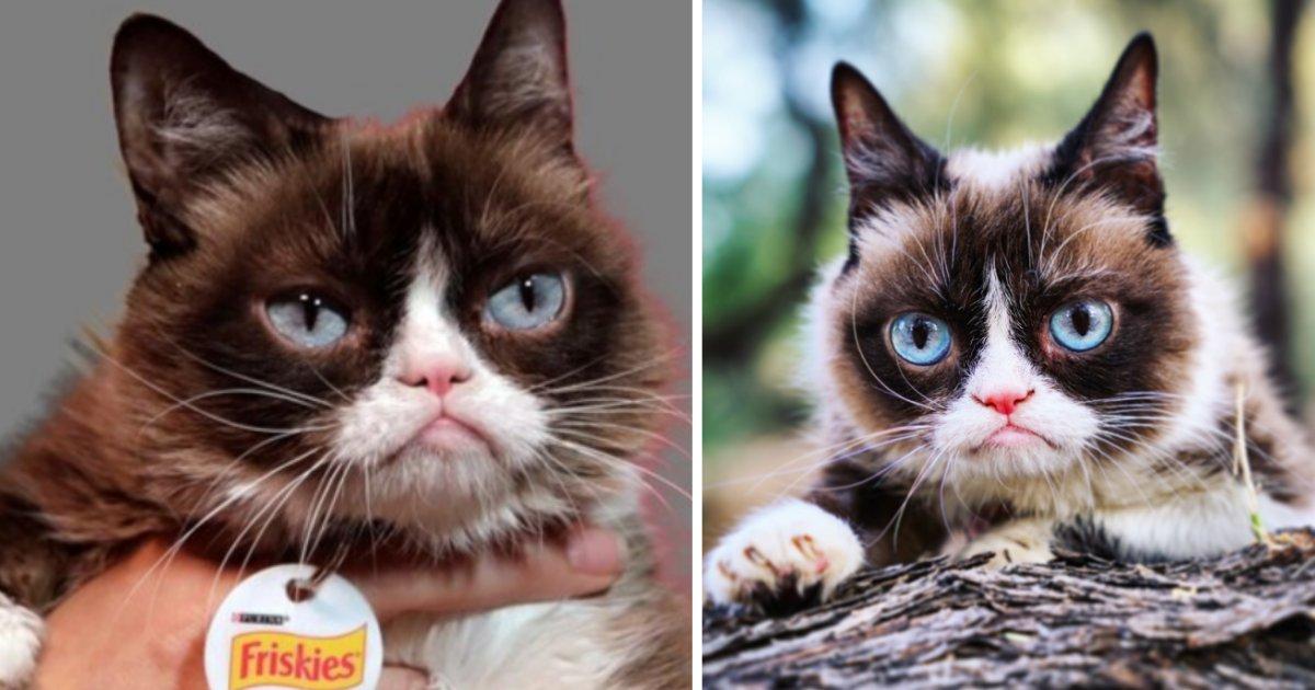 s1 10.png?resize=412,232 - Grumpy Cat est décédée le 14 mai...