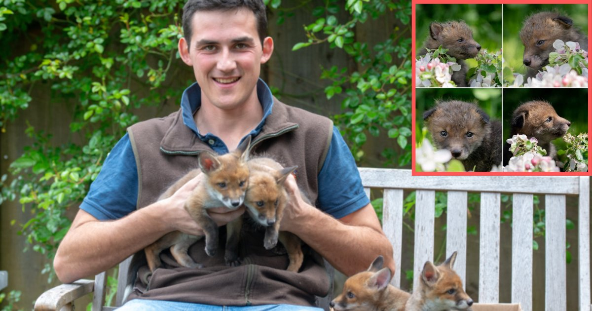 s1 9.png?resize=1200,630 - Man Performed C-Section on a Dead Fox to Save Lives of 4 Fox Cubs