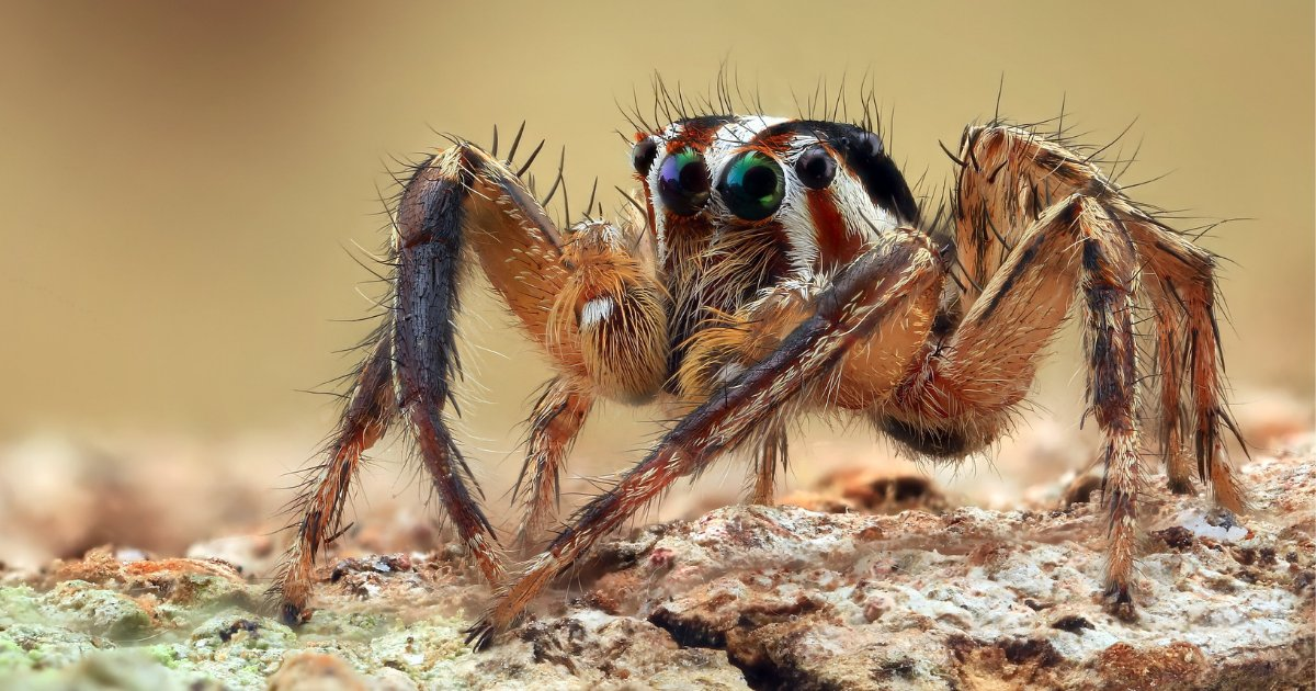 s2 13.png?resize=412,232 - Une femme a sauté d'une fourgonnette en panique en voyant une araignée sur ses genoux