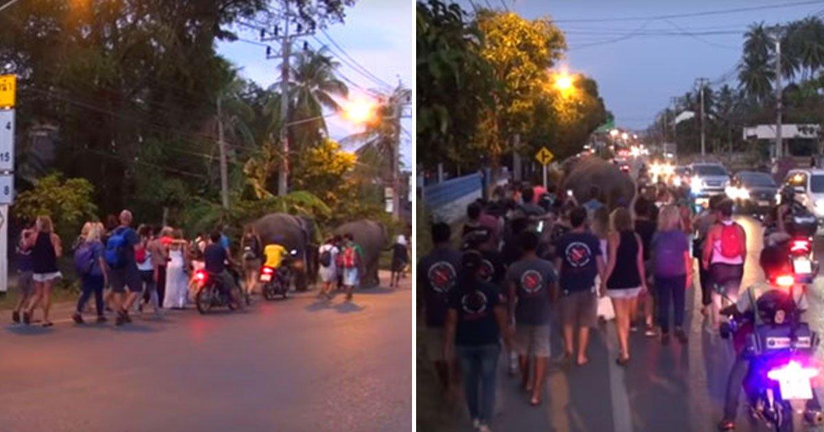 strangers elephants walk.jpg?resize=412,232 - Des étrangers se sont joints à des éléphants pour les accompagner à leur nouveau domicile