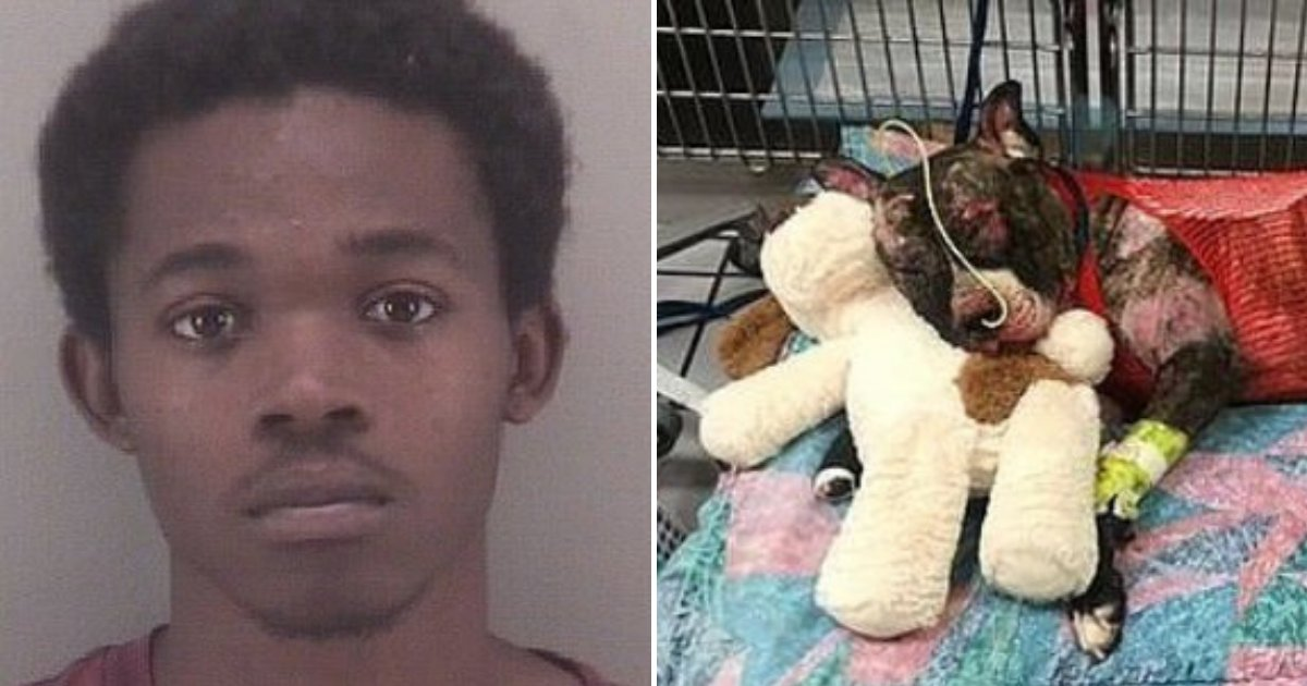 tommie5.png?resize=412,232 - 20-Year-Old Man Arrested For Tying A Dog To A Fence Before Setting Him On Fire
