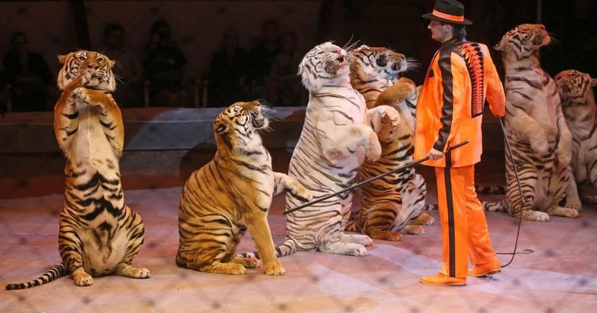 travelling circuses will be banned from using wild animals.jpg?resize=1200,630 - Traveling Circuses Will Be Banned From Using Wild Animals
