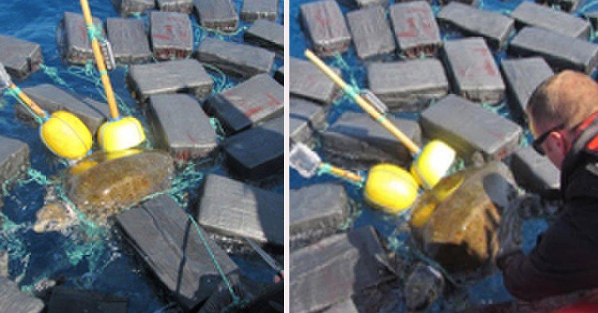 untitled 1 15.jpg?resize=1200,630 - Une tortue de mer a été trouvée empêtrée dans des paquets de cocaïne d'une valeur de 45 millions d'euros