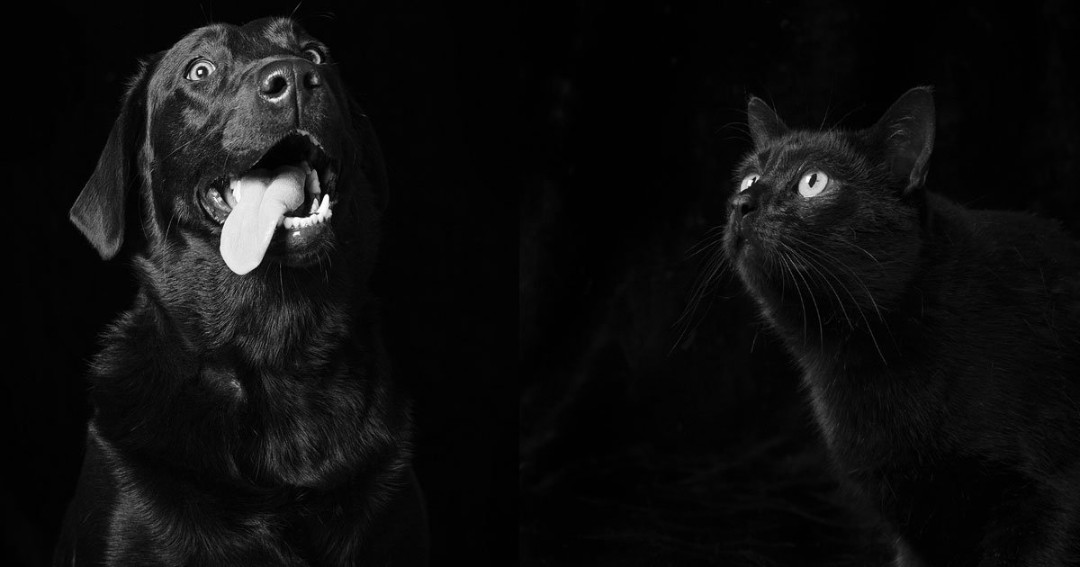 untitled 1 41.jpg?resize=1200,630 - Most People Do Not Want To Adopt Black Dogs Or Cats But These Pictures Prove That They Are Beautiful Too