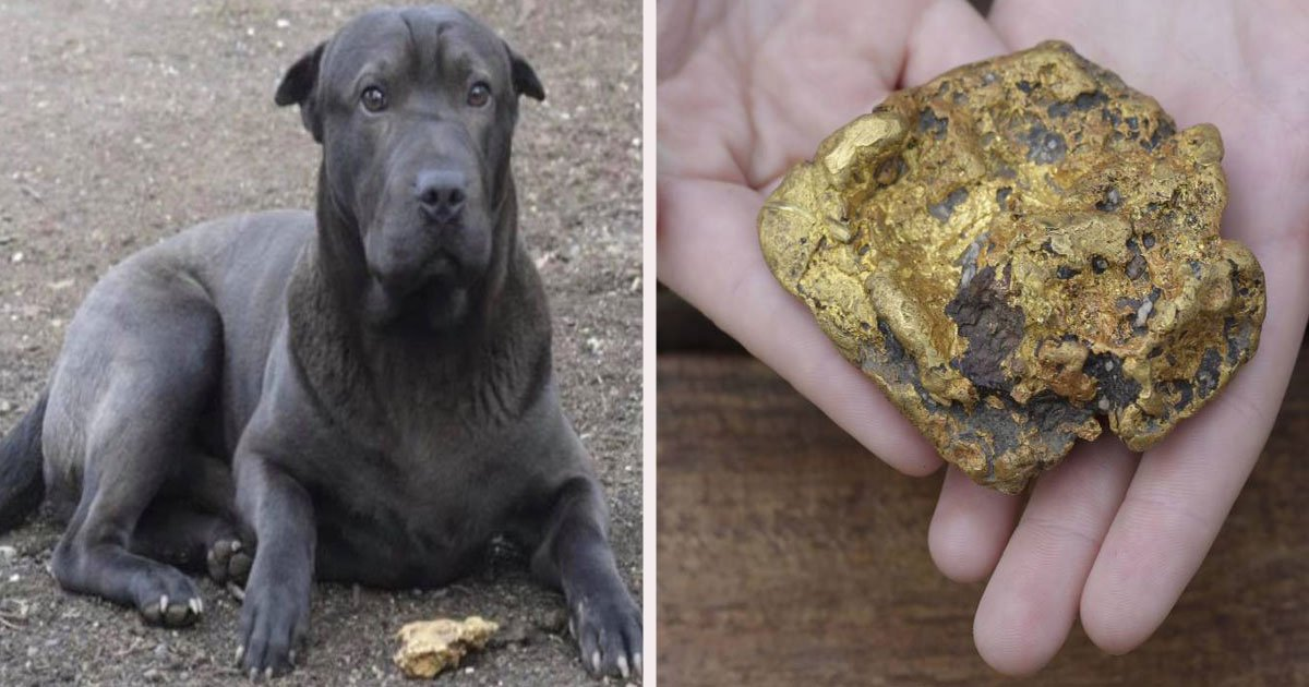 untitled 1 56.jpg?resize=1200,630 - A Family Dog Discovered A $35K Gold Nugget During A Morning Walk