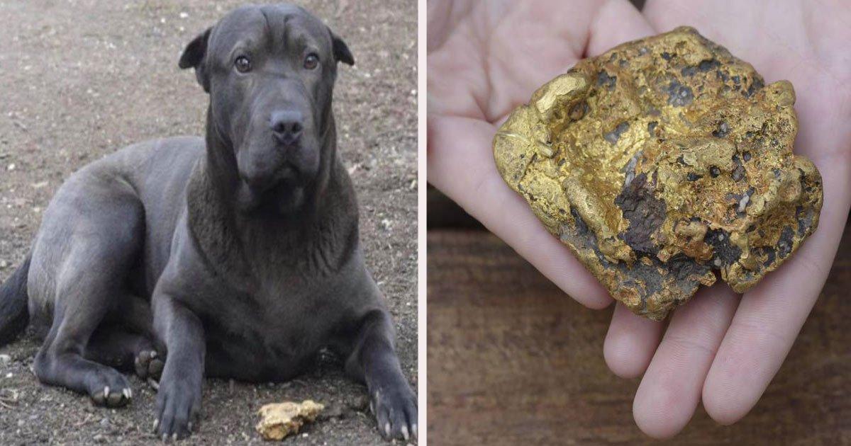 untitled 1 56.jpg?resize=300,169 - Ce chien a découvert une pépite d'or d'une valeur de 33 000 € lors d'une promenade matinale