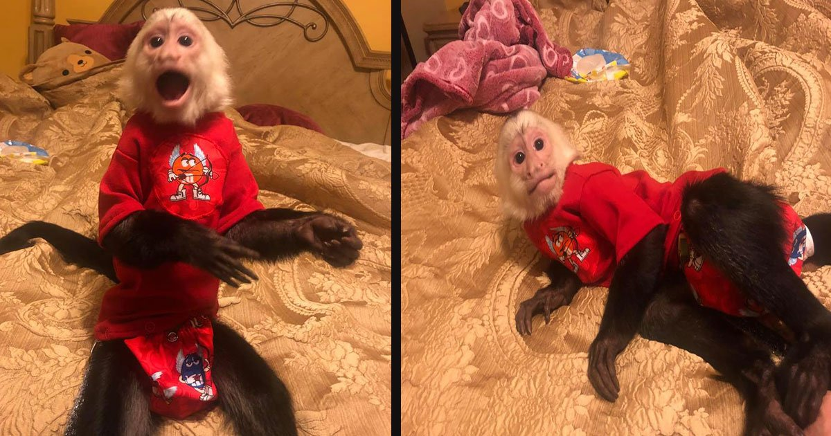 untitled 1 58.jpg?resize=1200,630 - Adorable Monkeys Start Screeching With Excitement As Their 'Grandma' Walks Through The Door