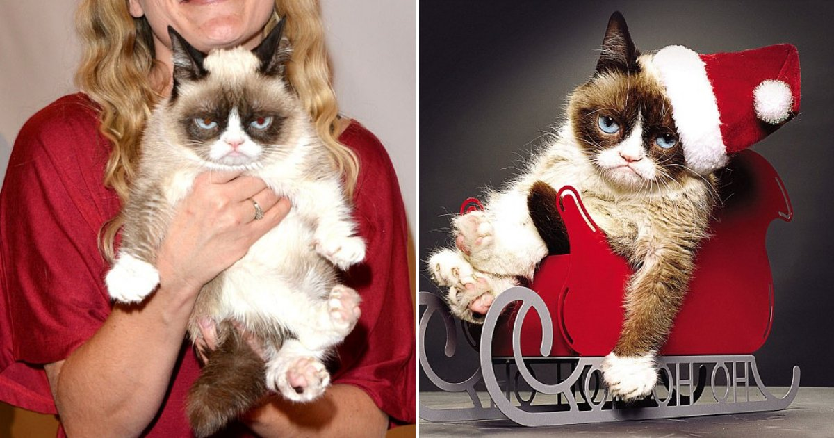 untitled design 86.png?resize=1200,630 - Internet Star Grumpy Cat Has Passed Away At The Age Of Seven