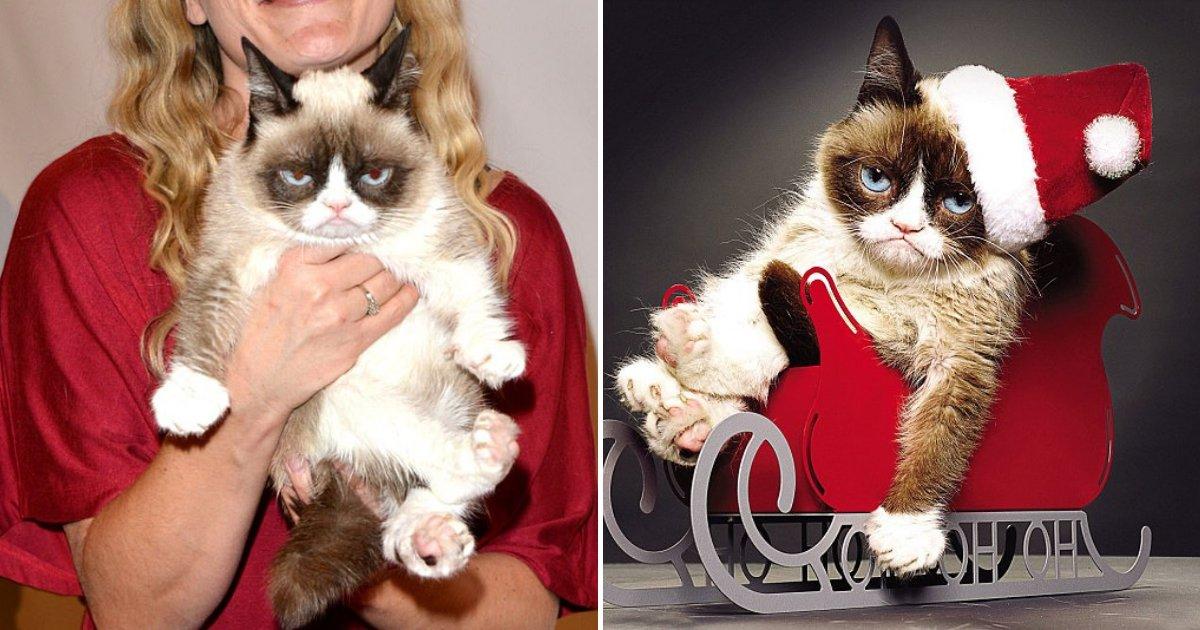 """untitled design 86.png?resize=412,232 - Le célèbre chat """"Grumpy Cat"""" est décédé à l'âge de sept ans"""