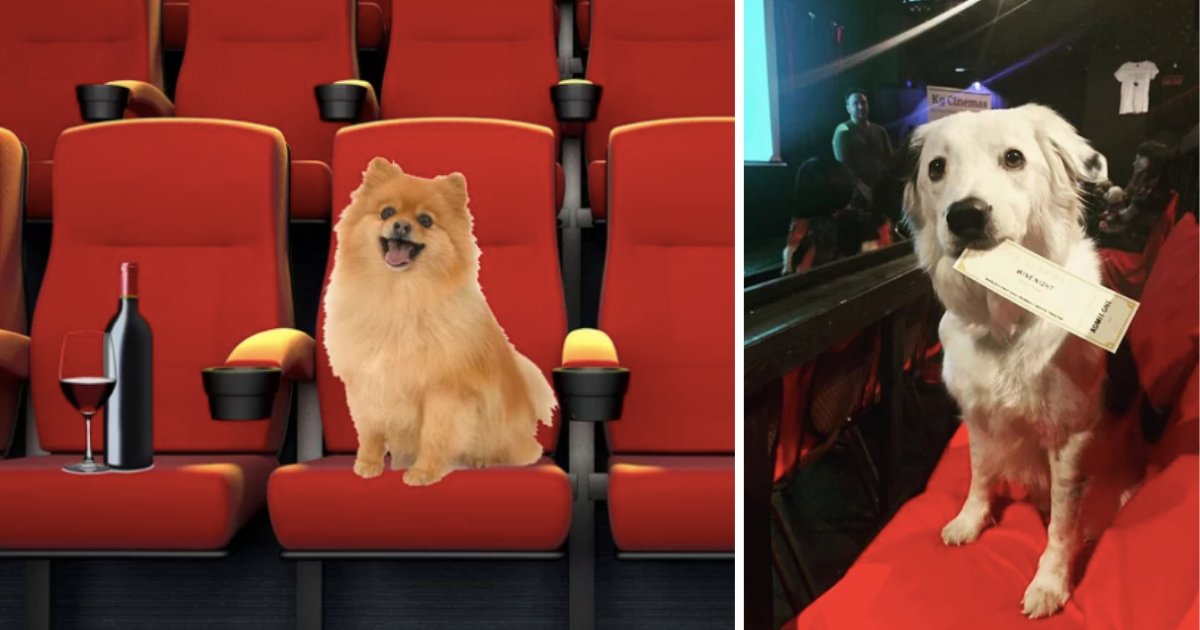 y1 18.png?resize=1200,630 - Theater Allows Dogs to Come Along with Their Owners