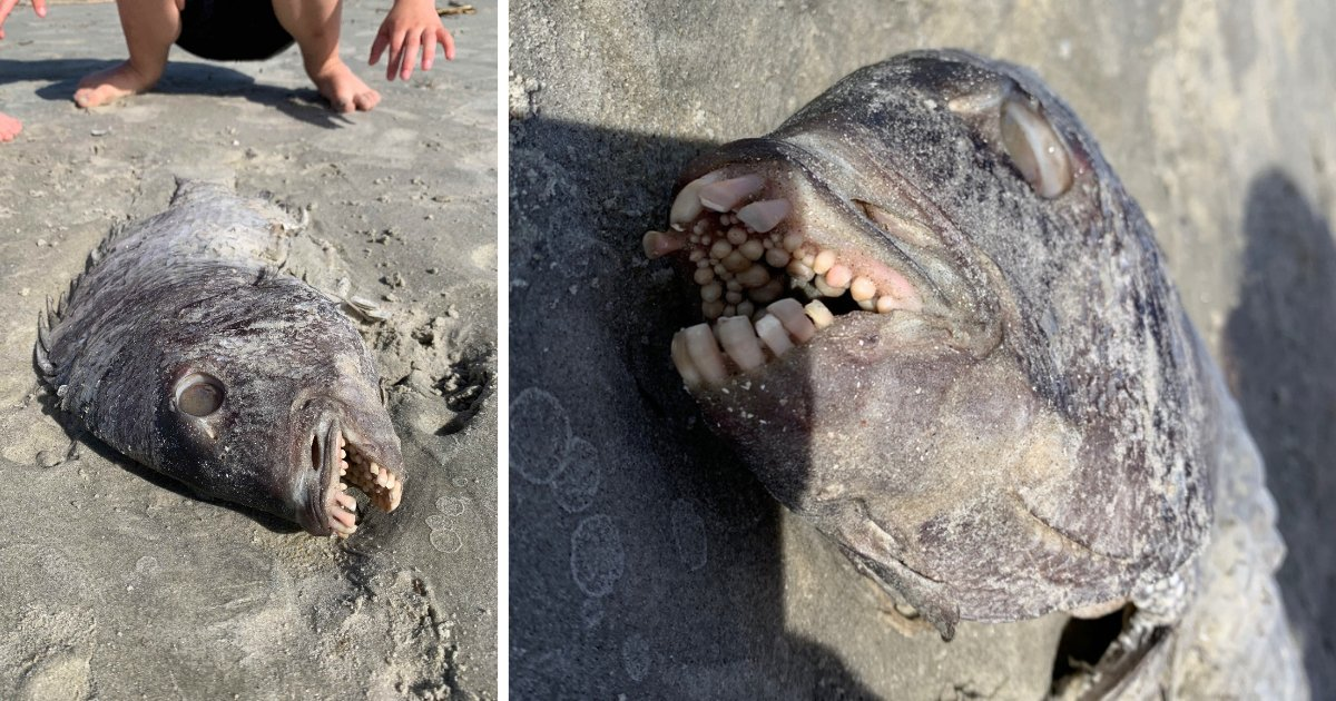 y1 9.png?resize=1200,630 - A Mother Finds A Fish Washed Off On the Beach With A Mouth Full of Human Teeth
