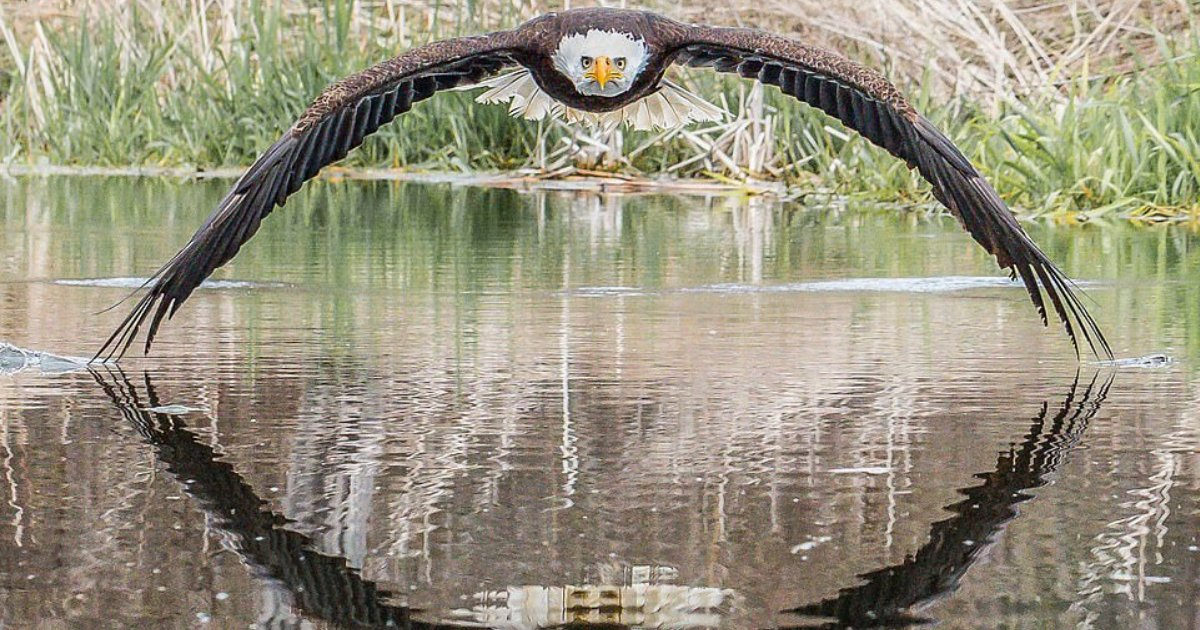 y2 17.png?resize=1200,630 - 'The Bald Eagle Stared Right Through Me' Says Photographer Who Took Amazingly Symmetric Picture
