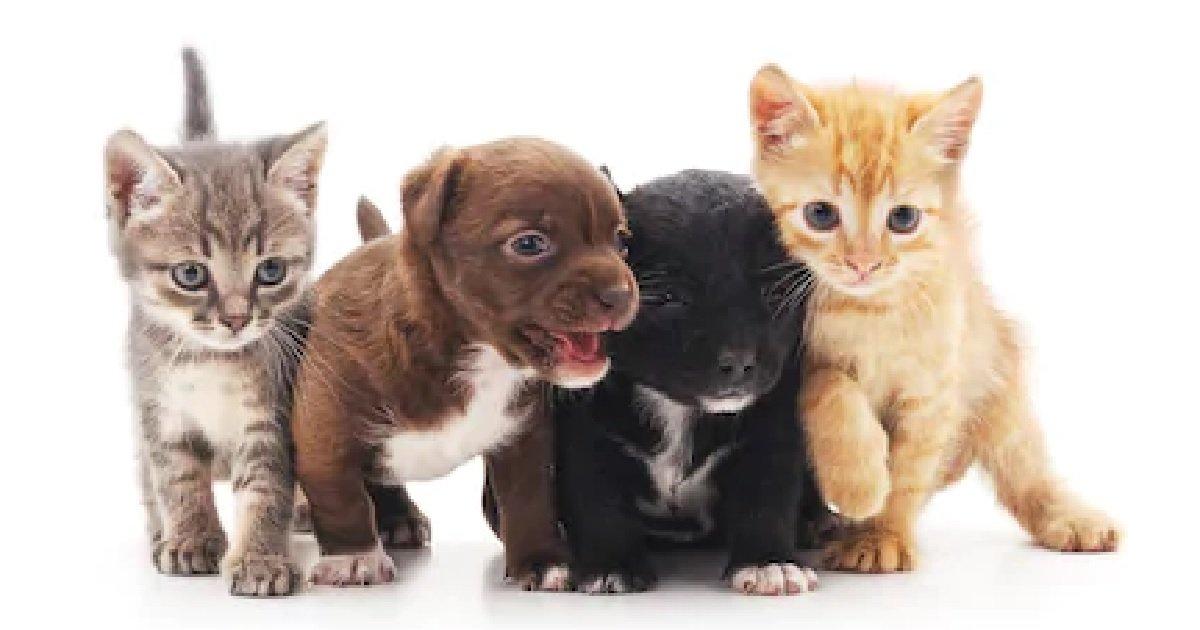 1 45.jpg?resize=1200,630 - 반려동물 위한 '동물등록제', 왜 '강아지'는 되고 '고양이'는 안될까