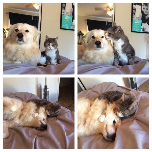 """Cat: """"You've got a couple stray hairs. You can't leave the house like that!""""Dog: """"MOOMMMMMM!"""""""