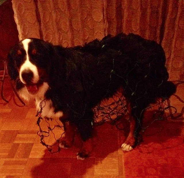 15 Pet Predicaments That Will Make You Either A) LOL, B) Cringe, C) Facepalm, Or D) All Of The Above