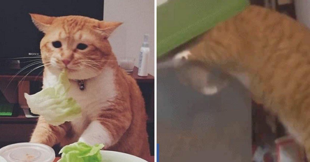 7 46.jpg?resize=412,232 - 고양이 다이어트 시킨 집사가 새벽에 발견한 놀라운 장면.gif