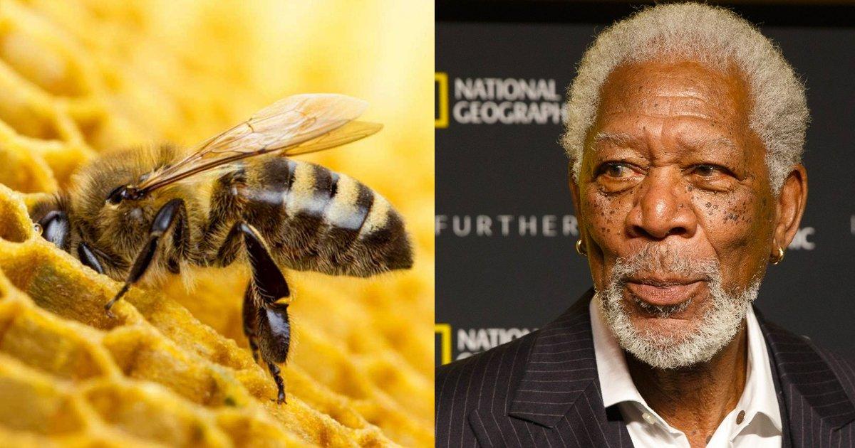 8 53.jpg?resize=1200,630 - Morgan Freeman convirtió su rancho de 50 hectáreas en un santuario de abejas para salvar al planeta