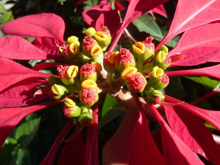 14 Belas flores que você pode ter em casa e dicas para os cuidados