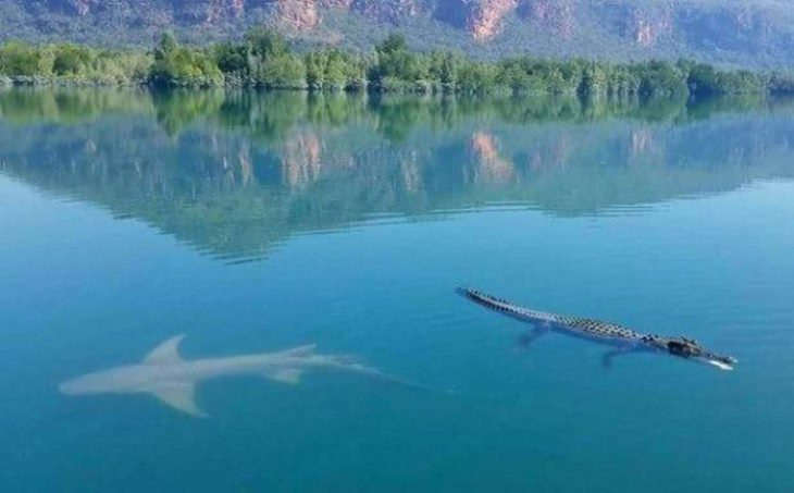 Australia especies peligros son amigos