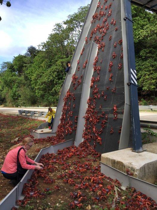 Australia puente para cangrejos