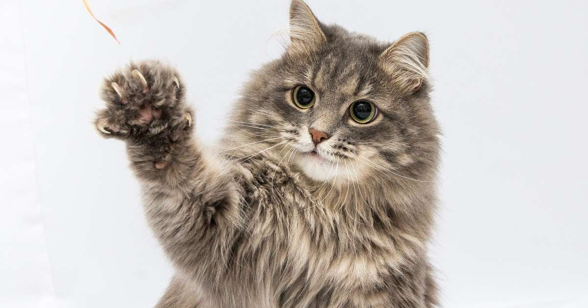 a 7.jpg?resize=1200,630 - New York Lawmakers Voted To Ban Pet Owners From Declawing Their Cats