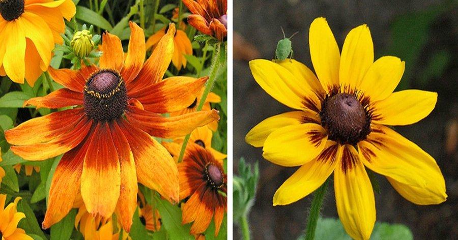 a7 3.jpg?resize=1200,630 - 14 Belas flores que você pode ter em casa e dicas para os cuidados
