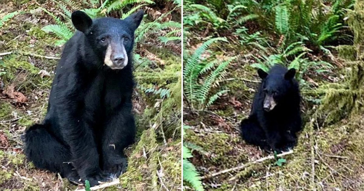bear5.png?resize=1200,630 - Wildlife Officials Shot Baby Bear After It Became 'Too Friendly With Humans'