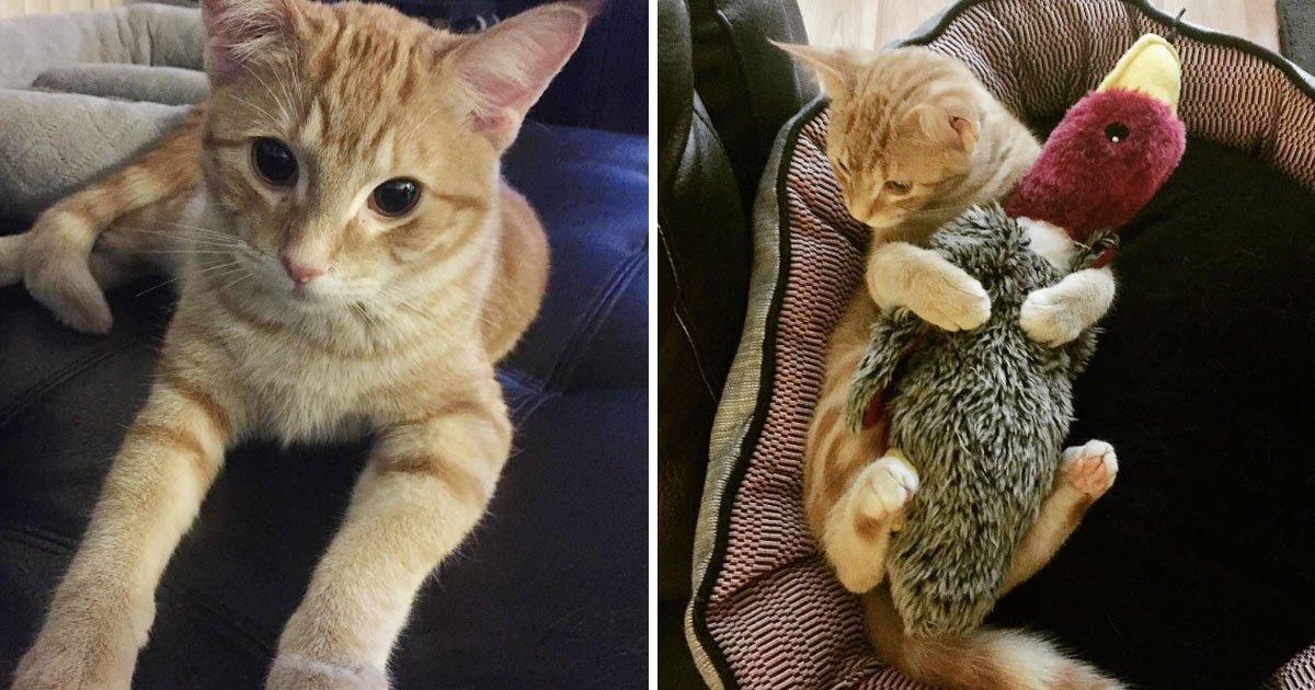 cat banana reaction.jpg?resize=412,232 - Regardez la drôle de réaction de ce chat devant une banane donnée par son propriétaire