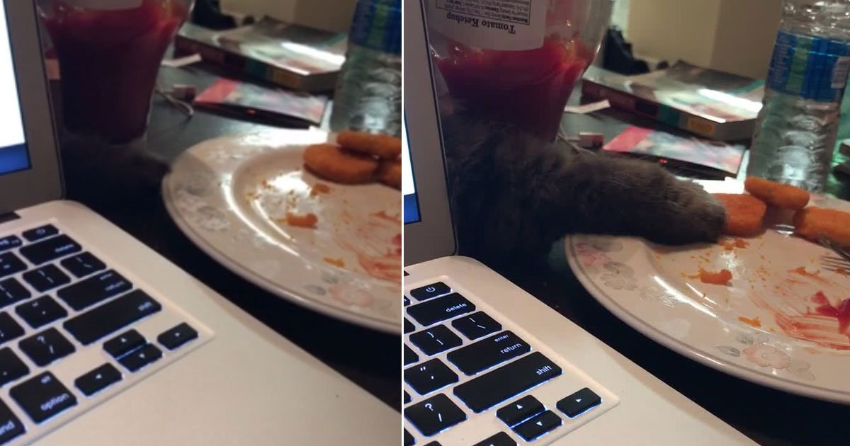 cat stealing food.jpg?resize=412,232 - Hilarious Video Of A Cat Stealing His Owner's Chicken Nugget
